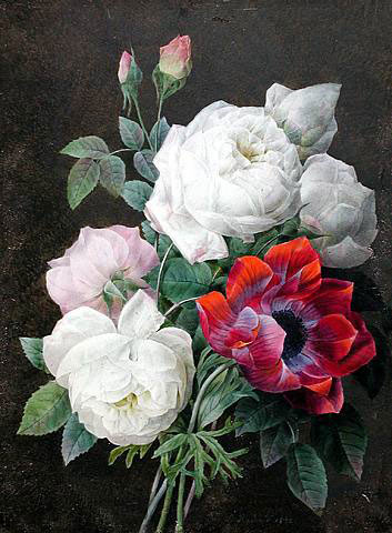 Roses ~ Redoute